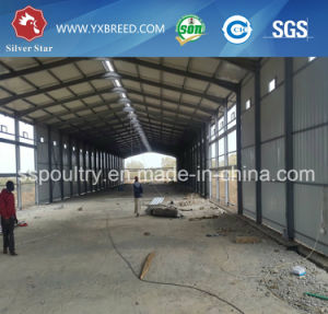 Best Price Automatic Layer Chicken Poultry Shed Cages with Eggs in Algeria pictures & photos