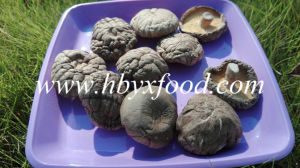 Dried Shiitake/ Dried Smooth Shiitake Mushroom pictures & photos