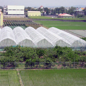 Agriculture Insect Proof Net/Plastic Insect Screen for Greenhouse Factory pictures & photos
