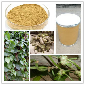 80% Notoginsenosides Radix Notoginseng Extract pictures & photos