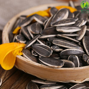 Chinese Sunflower Seeds 5009 with High Quality for Export