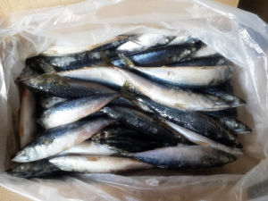 Unsalted Whole Japanese Mackerel for Human Consumption pictures & photos