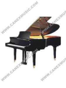 Piano de clavier/piano à queue (GP186)