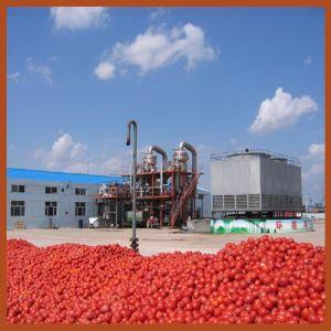 com 30 Years Experience Jd Tomato Paste Machine