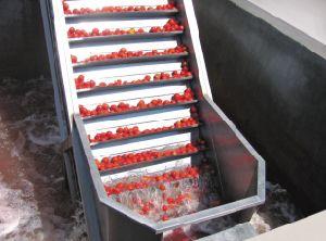 Elevador da fruta da posição do raspador do aço inoxidável baixo