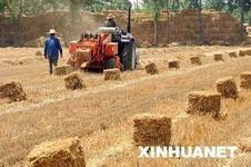 зеленое газифицирование биомассы энергии 600kw с швырком, углем, выпарками урожая, заводом биомассы животного позема