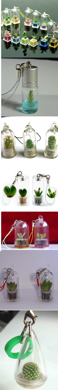 "Живой брелок ""Миникактус"" или pet plant ,Pet Tree Promotion-Gifts-Live-Mini-Plant-Plant-Pet-Tree"