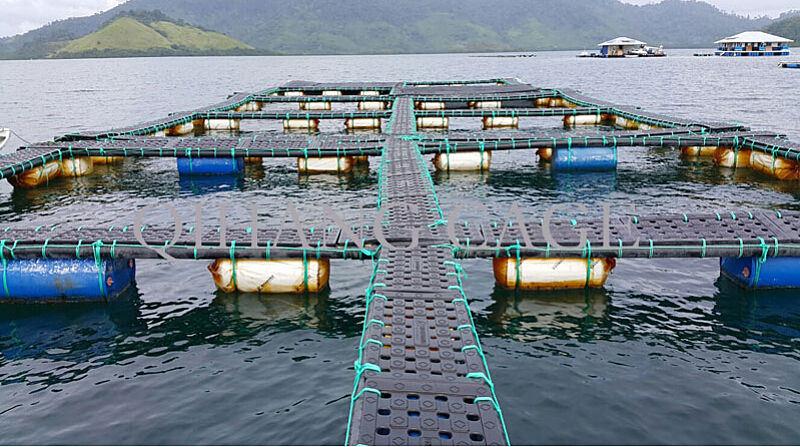 Barrage d 39 aquiculture de l 39 ouganda cultivant des camps de for Construccion de jaulas flotantes para tilapia