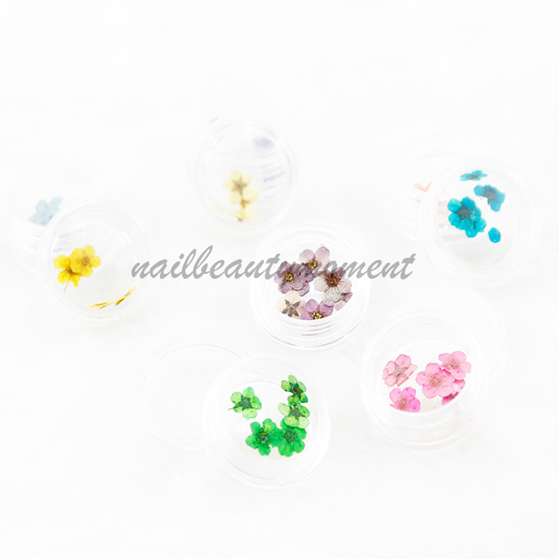 Nail Art Dried Flowers Decoration Products Kit (D55)