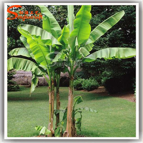 La decoraci n del hogar de pl stico pl tanos plantas for Banano de jardin