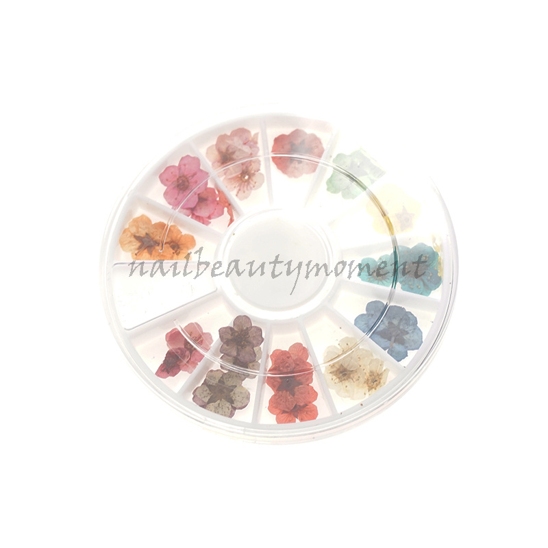 Nail Art Real Dried Flowers Decoration Products (D66)