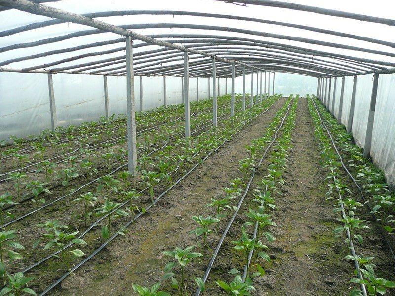 Syst me d 39 irrigation agricole de drip d 39 arroseuse syst me d 39 - Systeme irrigation jardin ...