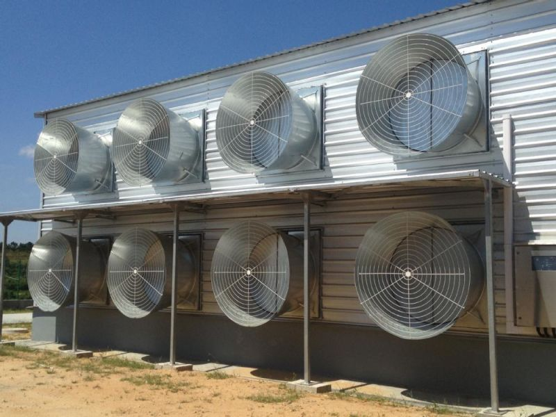 Chicken House/Poultry House&Poultry Farm with Broiler Poultry Equipment