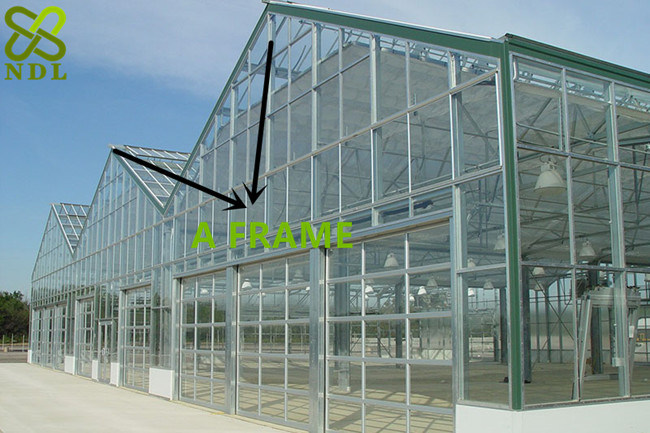 Gutter-Connected Multi Span Polycarbonate Sheet Greenhouse