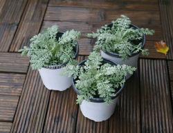 China Terracotta Pots Planter