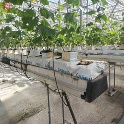 Factory Direct Wholesale Auto Greenhouse with Irrigation/Hydroponic System for Rose