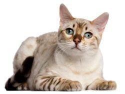 All Nature Kitty/ Kitten Dry Food