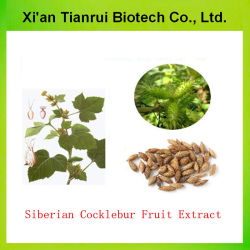 Factory Supply Pure Nature Siberian Cocklebur Fruit Extract