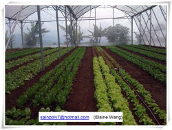 Factory Price Plastic Film Greenhouse Shed for Agriculture