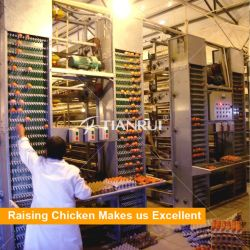 chicken farm equipment for egg chicken