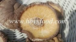 Fresh Healthy Food 5kg or 10kg Per Bag Dried Smooth Shiitake Mushroom
