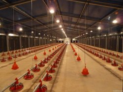 Galvanized Steel Structure Design Poultry Farm Shed