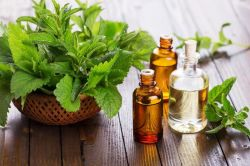 Nature 50% Essential Peppermint Oil with Factory Price