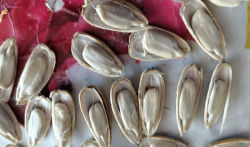 Wholesale Price with High Quality of Sunflower Seeds 2020crop From Inner Mongolia