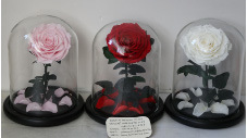 Wholesale Single Preserved Rose in Glass Dome with Wood Base for Wedding Centerpiece