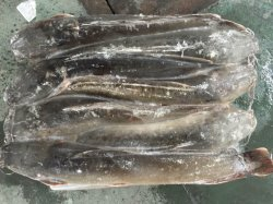Chinese Frozen Catfish Factory