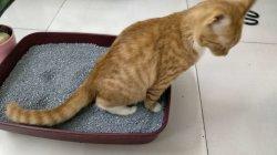 Odor Control Bentonite Cat Sand Black Color