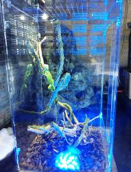 Wholesale Reptile Terrarium China Wholesale Reptile Terrarium