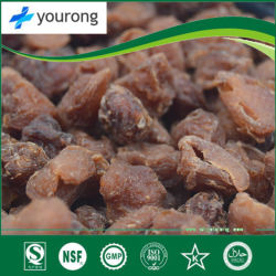Longan, a Traditional Chinese Medicine with The Functions of Invigorating Qi and Blood and Invigorating Spleen and Stomach
