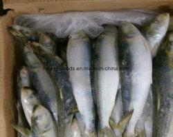 Chinese Factory Frozen Sardine Fish Price