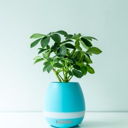 Mini Plant Music Pot Bluetooth Speaker with Aroma and Negative Ions