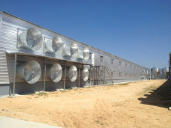 Prefabricated Customized Steel Structure Poultry House