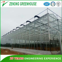 High Quality Factory Wholesale Gutter Connected Glass Greenhouse for Sale
