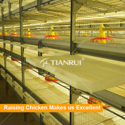Factory Direct Design Automatic Poultry Farming Broiler Chicks Rate