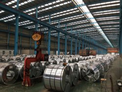 Shandong Prepainted Gl Steel Coil / PPGI /Low Price Cold Rolled PPGL Color Coated Galvanized