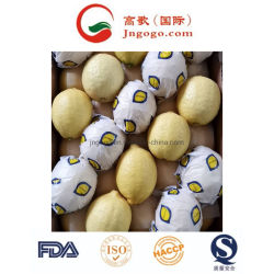 Grade a New Crop Fresh Lemon From China
