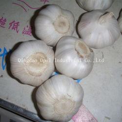 Wholesale Fresh Vegetables, Wholesale Fresh Vegetables