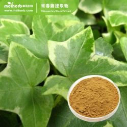China Hedera Helix Extract, Hedera Helix Extract Manufacturers