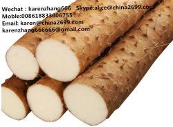 China Wild Yam Root Wild Yam Root Manufacturers Suppliers Made