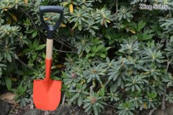 High Carbon Steel Spade with Wooden Handle D Grip