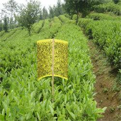 Zq-Customize Yellow Black Insect Glue Trap Board