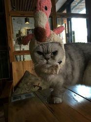 Pet Warm Head Wear Soft Plush Flamingo Head Gear with Chin Strap Cat Dog Head Accessories Dailywear Party Costume Esg12621