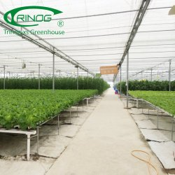 Wholesale Hydroponic Growing Systems, Wholesale Hydroponic