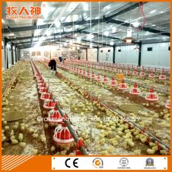 Turnkey Modern Chicken Farm Poultry House From Factory