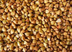 Natural Nutritional Buckwheat Seed D Chiro-Inositol