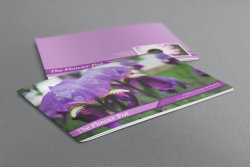 Hotsale Colorful Paper Printing Booklet with Cheaper Price